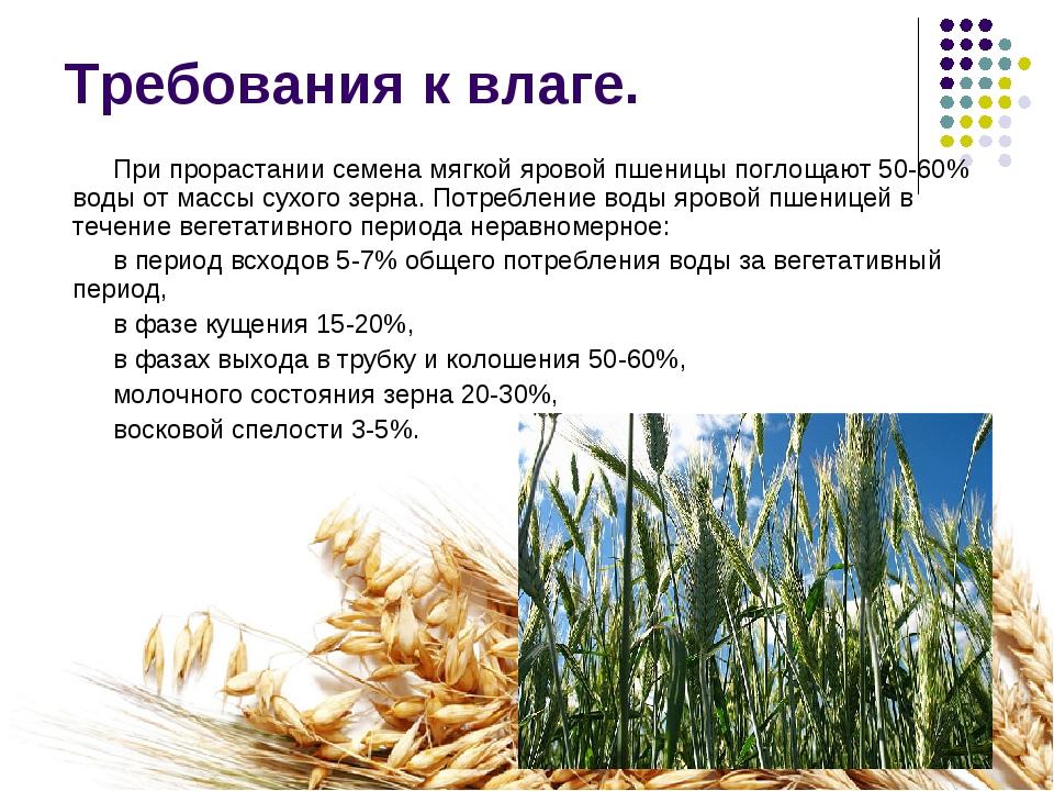 Требования к влаге. При прорастании семена мягкой яровой пшеницы поглощают 50...