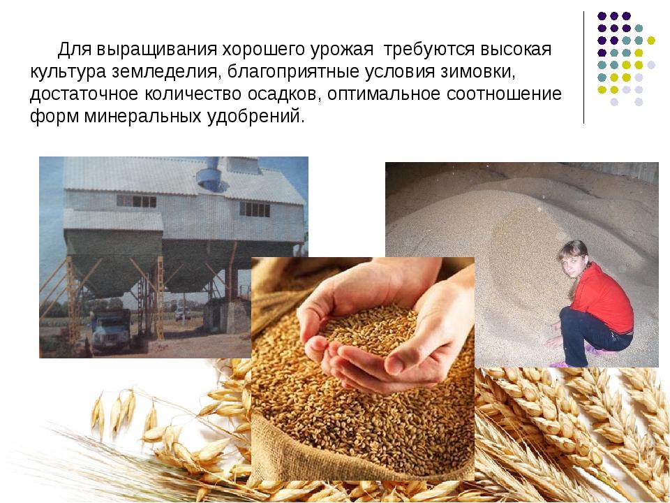 Для выращивания хорошего урожая требуются высокая культура земледелия, благоп...
