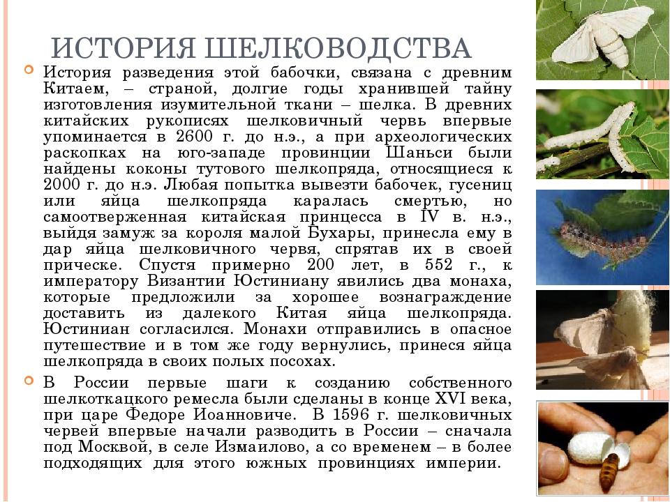 ИСТОРИЯ ШЕЛКОВОДСТВА История разведения этой бабочки, связана с древним Китае...