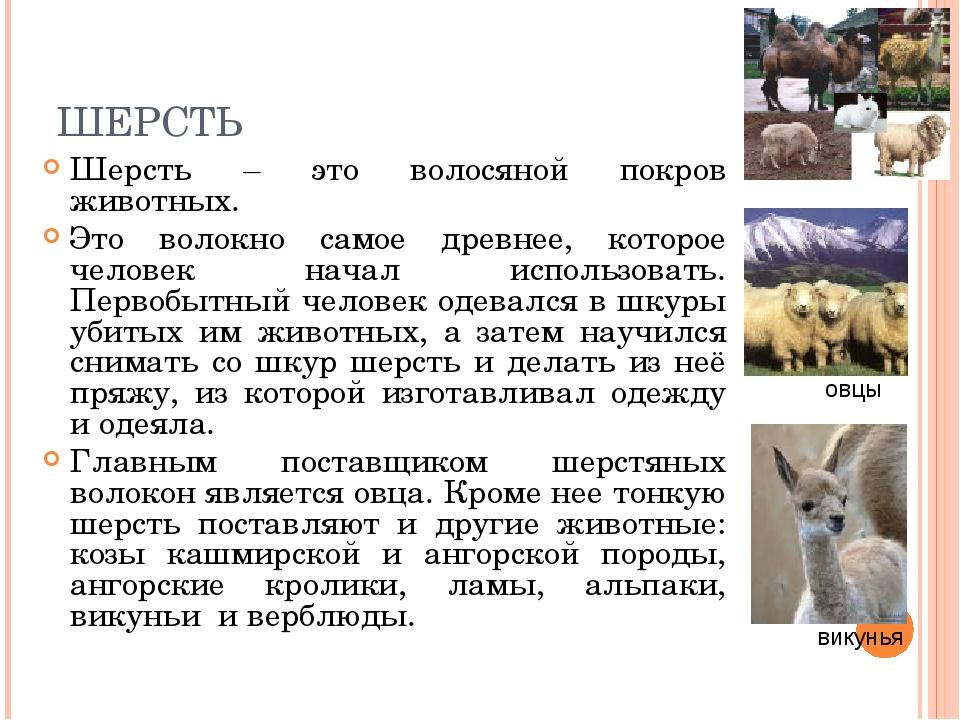 ШЕРСТЬ Шерсть – это волосяной покров животных. Это волокно самое древнее, кот...