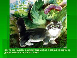 Как-то раз налетел на маму Чёрный Кот и погнал её прочь со двора. И был этот
