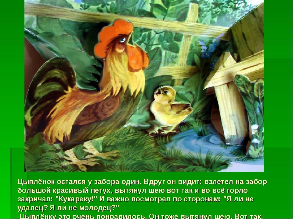 Цыплёнок остался у забора один. Вдруг он видит: взлетел на забор большой крас...