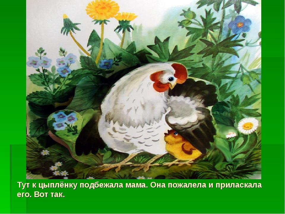 Тут к цыплёнку подбежала мама. Она пожалела и приласкала его. Вот так.