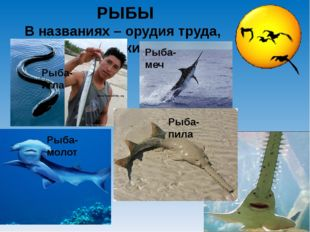 РЫБЫ В названиях – орудия труда, оружие Рыба-пила Рыба-игла Рыба-меч Рыба-молот