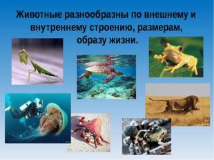 Животные разнообразны по внешнему и внутреннему строению, размерам, образу жи