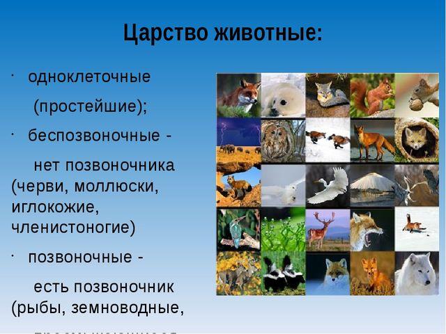 Царство животные: одноклеточные (простейшие); беспозвоночные - нет позвоноч...
