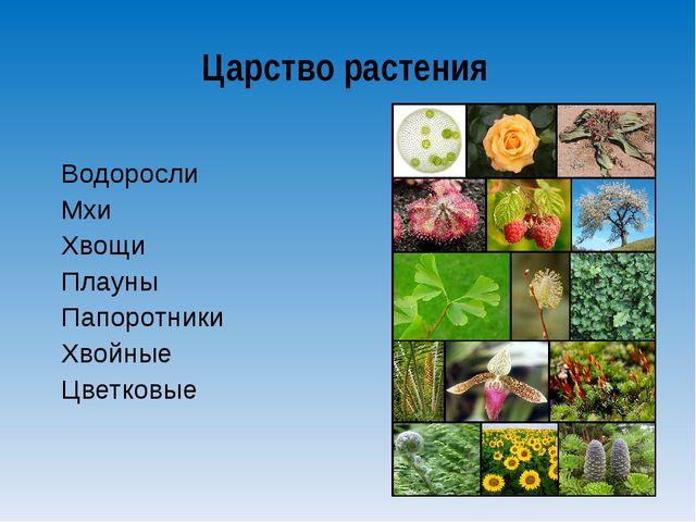 Водоросли Мхи Хвощи Плауны Папоротники Хвойные Цветковые Царство растения