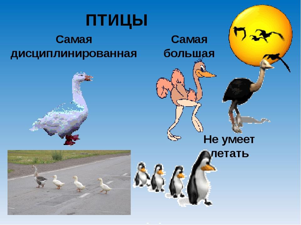 Самая дисциплинированная ПТИЦЫ Самая большая Не умеет летать