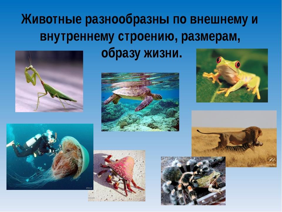 Животные разнообразны по внешнему и внутреннему строению, размерам, образу жи...