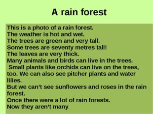 A rain forest This is a photo of a rain forest. The weather is hot and wet. T