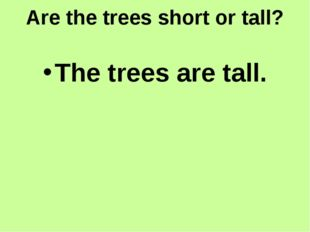 Are the trees short or tall? The trees are tall.