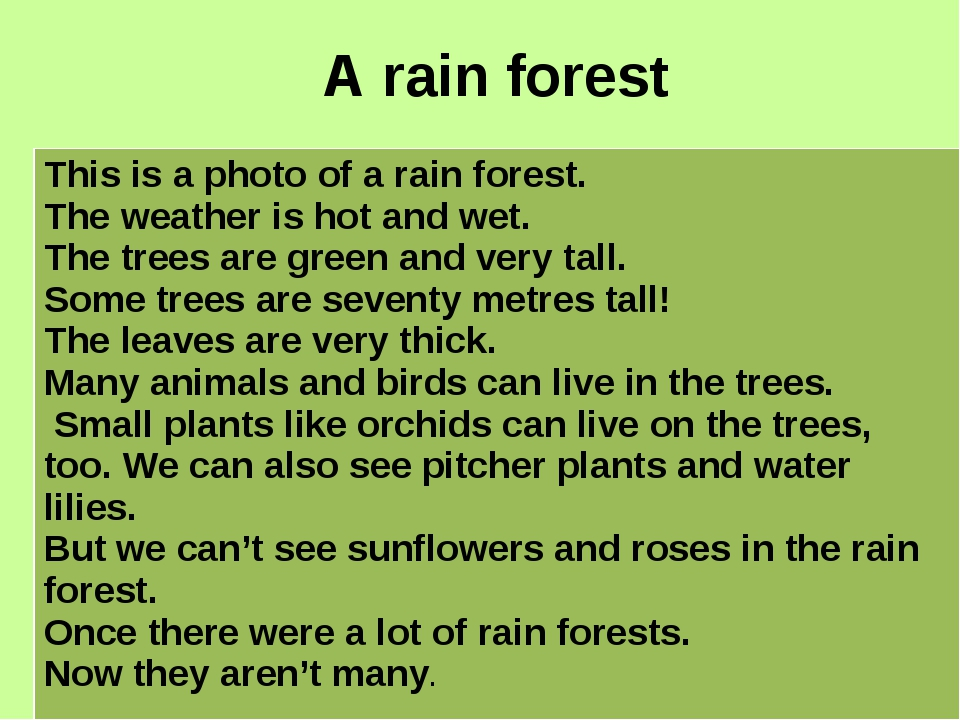 A rain forest This is a photo of a rain forest. The weather is hot and wet. T...