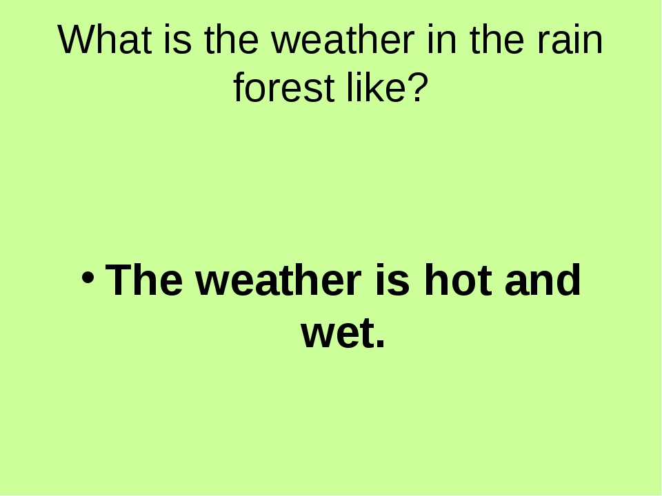 What is the weather in the rain forest like? The weather is hot and wet.