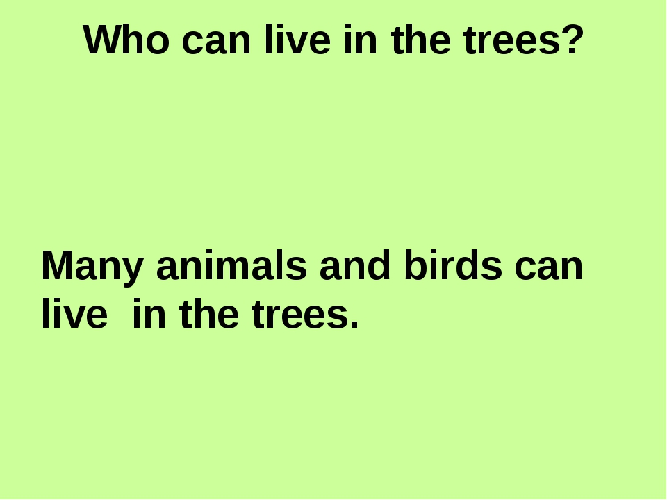 Who can live in the trees? Many animals and birds can live in the trees.