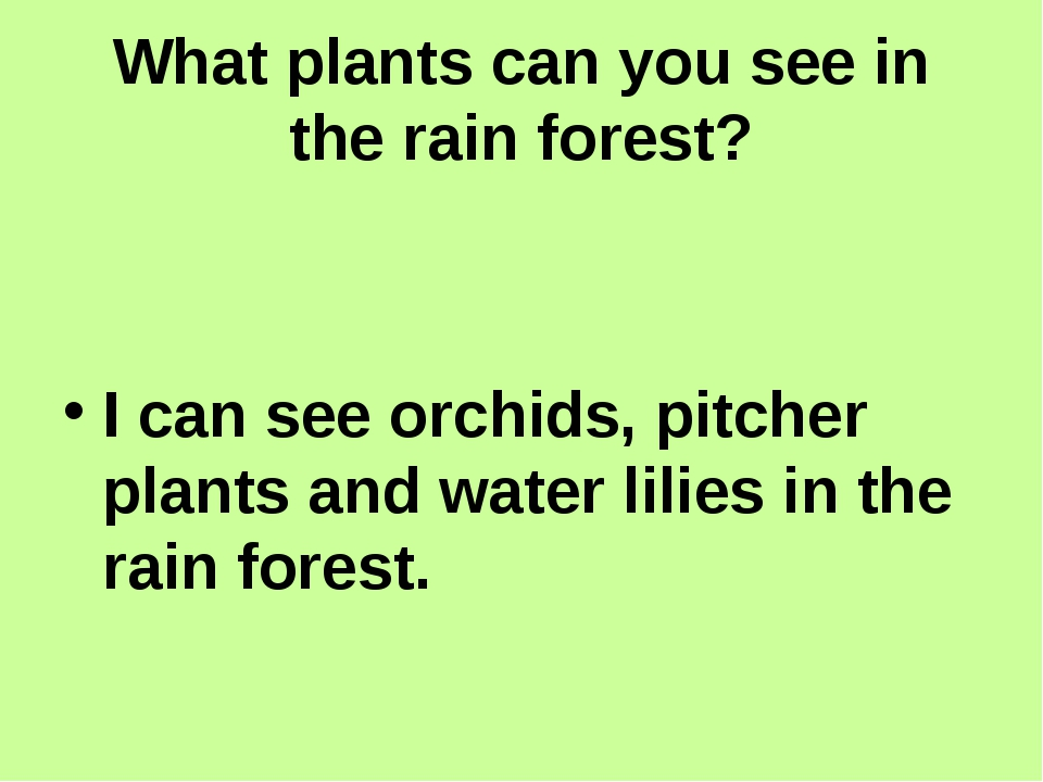 What plants can you see in the rain forest? I can see orchids, pitcher plant...