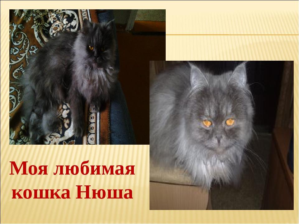 Моя любимая кошка Нюша