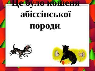 Це було кошеня абіссінської породи.