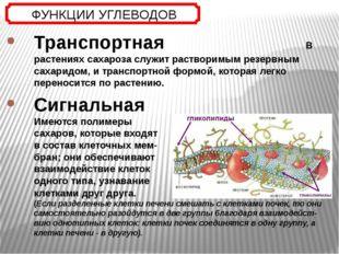 Транспортная В растениях сахароза служит растворимым резервным сахаридом, и т