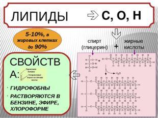  С, О, Н спирт (глицерин) жирные кислоты + ГИДРОФОБНЫ РАСТВОРЯЮТСЯ В БЕНЗИН