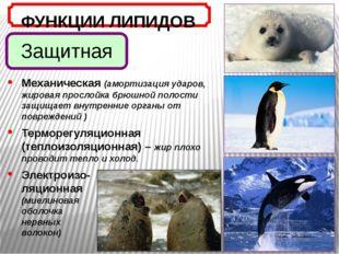 Защитная ФУНКЦИИ ЛИПИДОВ Механическая (амортизация ударов, жировая прослойка