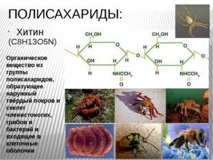 ПОЛИСАХАРИДЫ: Хитин Органическое вещество из группы полисахаридов, образующее