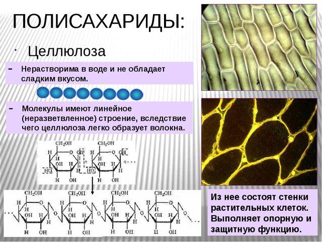 ПОЛИСАХАРИДЫ: Целлюлоза Молекулы имеют линейное (неразветвленное) строение, в...