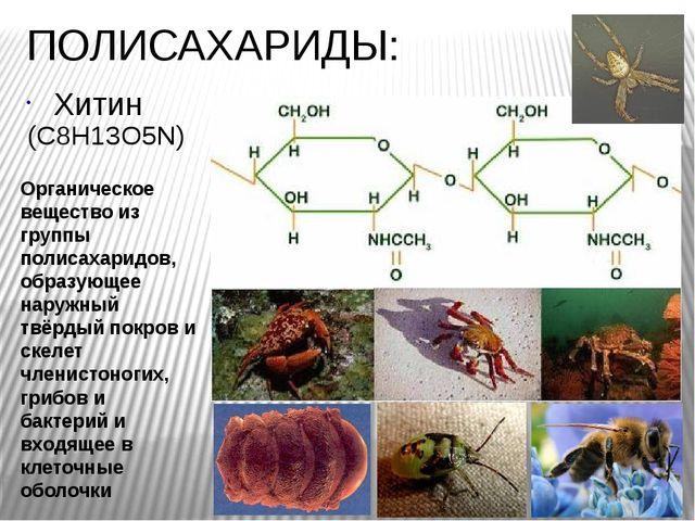 ПОЛИСАХАРИДЫ: Хитин Органическое вещество из группы полисахаридов, образующее...