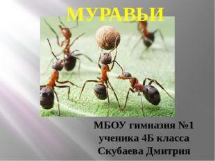МУРАВЬИ МБОУ гимназия №1 ученика 4Б класса Скубаева Дмитрия