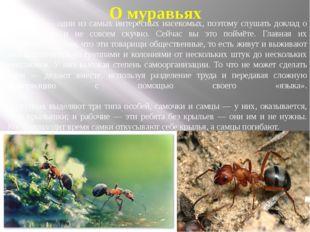 О муравьях Муравьи— одни из самых интересных насекомых, поэтому слушать докл