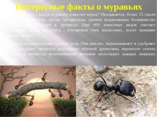 Интересные факты о муравьях Сколько же всего видов муравьёв известно науке? О