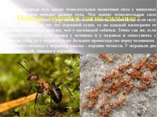 Почему муравьи такие сильные? В живой природе есть закон: относительная мышеч