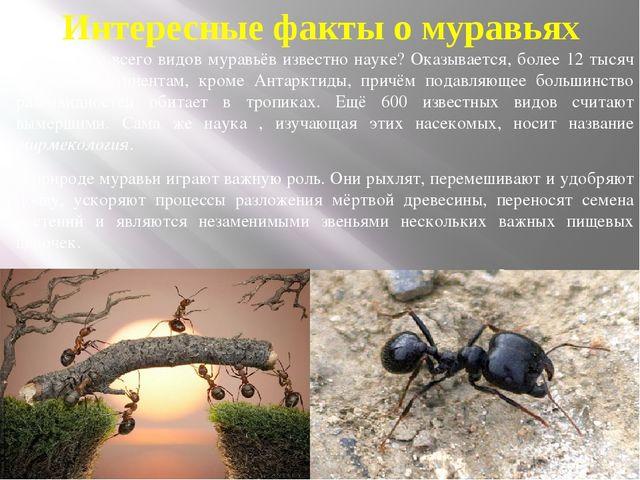 Интересные факты о муравьях Сколько же всего видов муравьёв известно науке? О...