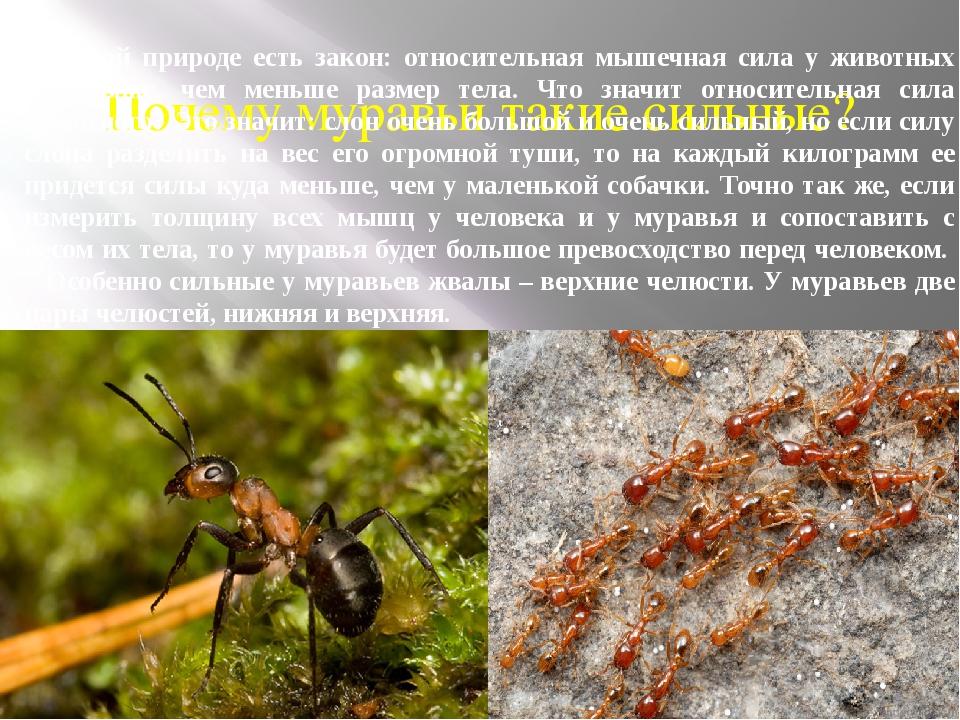 Почему муравьи такие сильные? В живой природе есть закон: относительная мышеч...