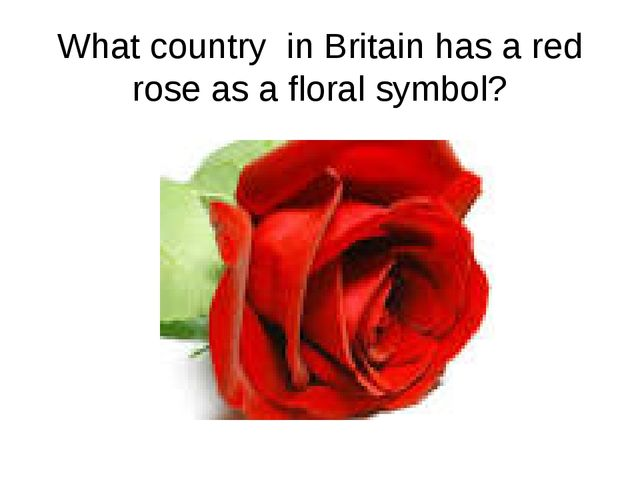 What country in Britain has a red rose as a floral symbol?