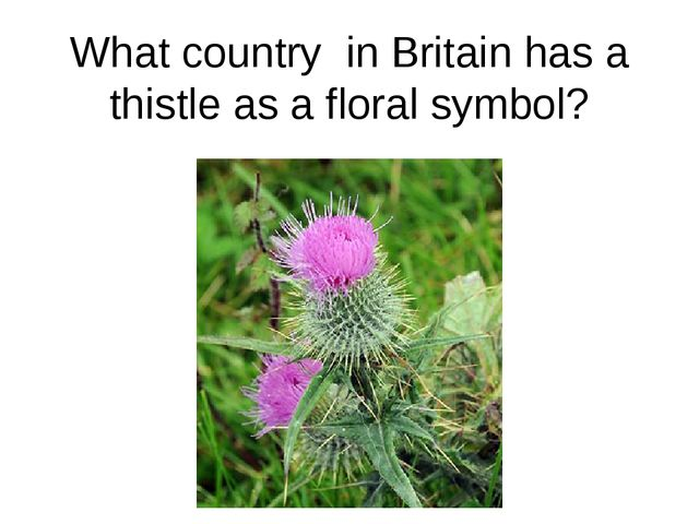 What country in Britain has a thistle as a floral symbol?