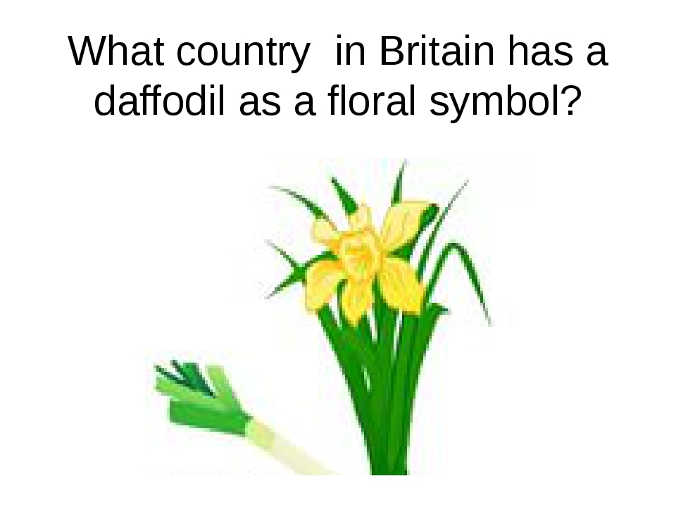 What country in Britain has a daffodil as a floral symbol?