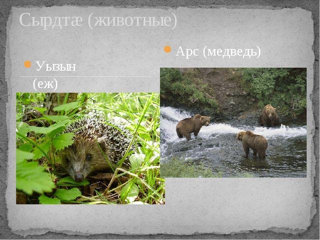 Уызын (еж) Сырдтæ (животные) Арс (медведь)