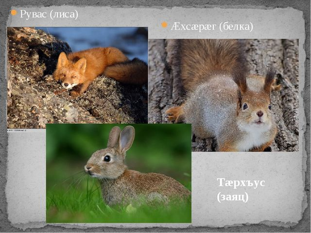 Рувас (лиса) Æхсæрæг (белка) Тæрхъус (заяц)