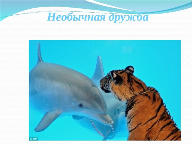 Необычная дружба