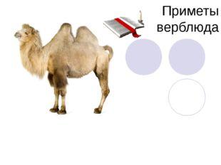 Приметы верблюда