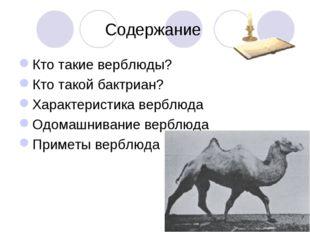 Содержание Кто такие верблюды? Кто такой бактриан? Характеристика верблюда О