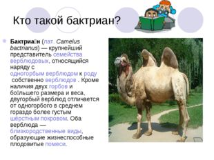 Кто такой бактриан? Бактриа́н(лат.Camelus bactrianus) — крупнейший представ