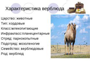 Характеристика верблюда Царство: животные Тип: хордовые Класс:млекопитающие И