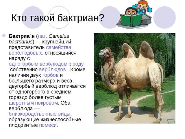 Кто такой бактриан? Бактриа́н(лат.Camelus bactrianus) — крупнейший представ...