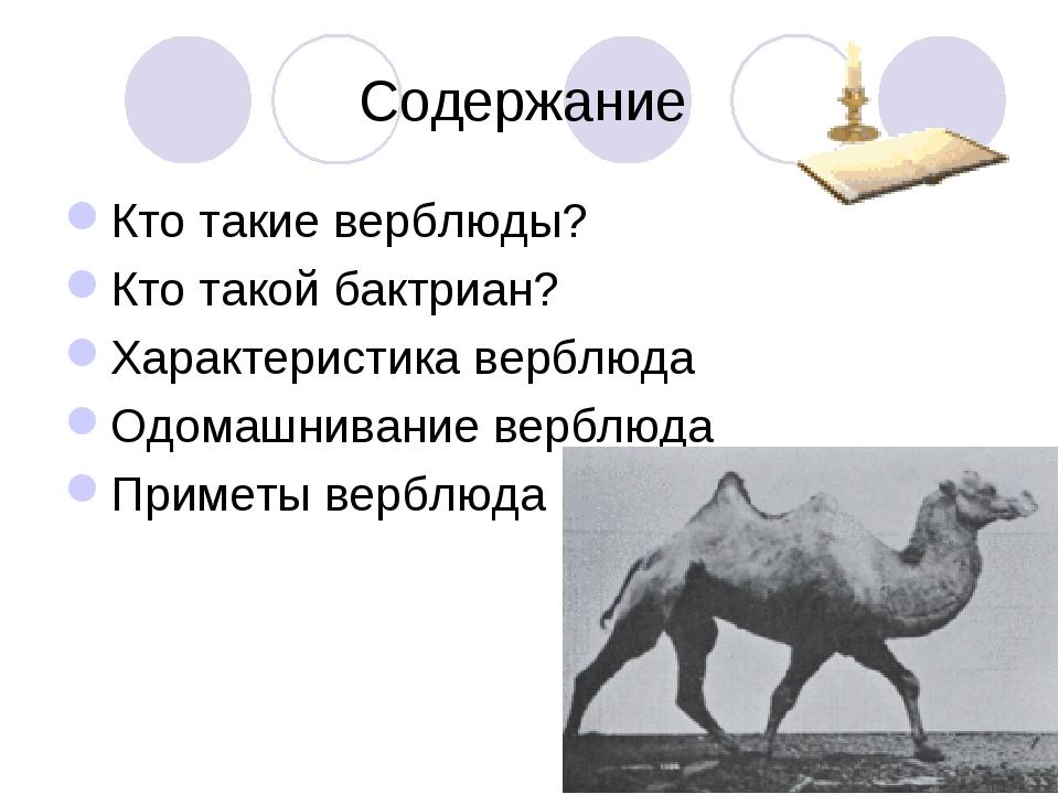 Содержание Кто такие верблюды? Кто такой бактриан? Характеристика верблюда О...
