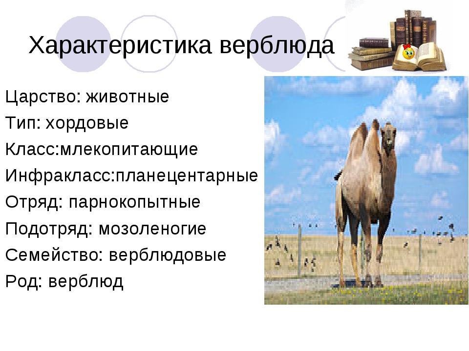 Характеристика верблюда Царство: животные Тип: хордовые Класс:млекопитающие И...