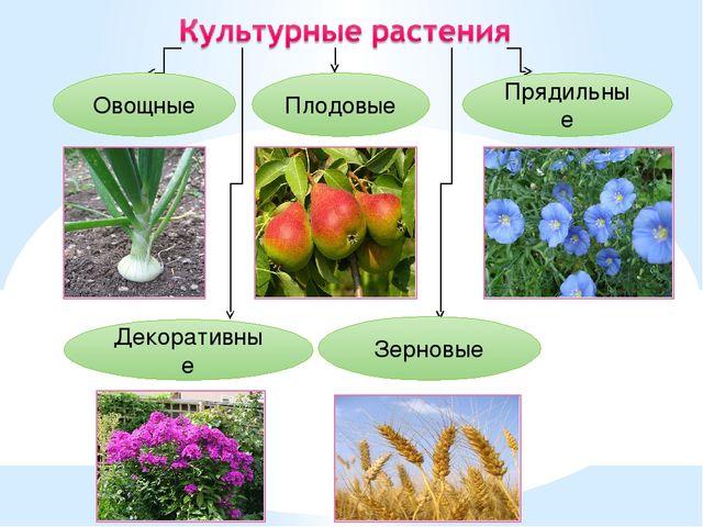 Овощные Декоративные Плодовые Зерновые Прядильные