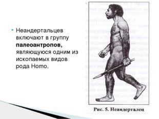 Неандертальцев включают в группу палеоантропов, являющуюся одним из ископаемы