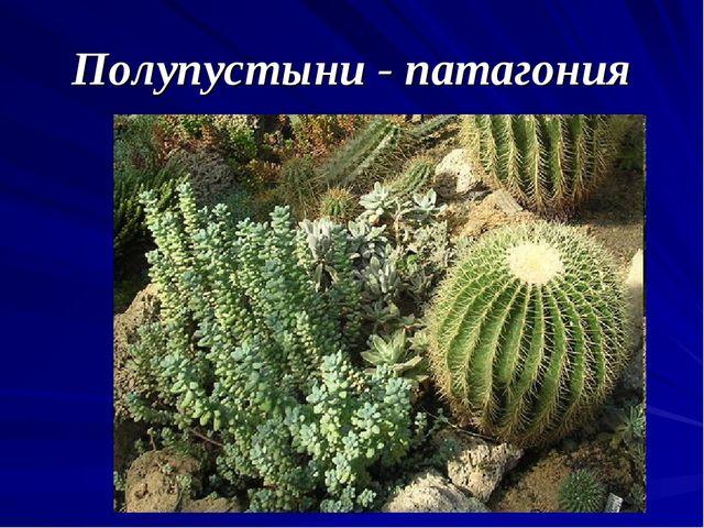 Полупустыни - патагония