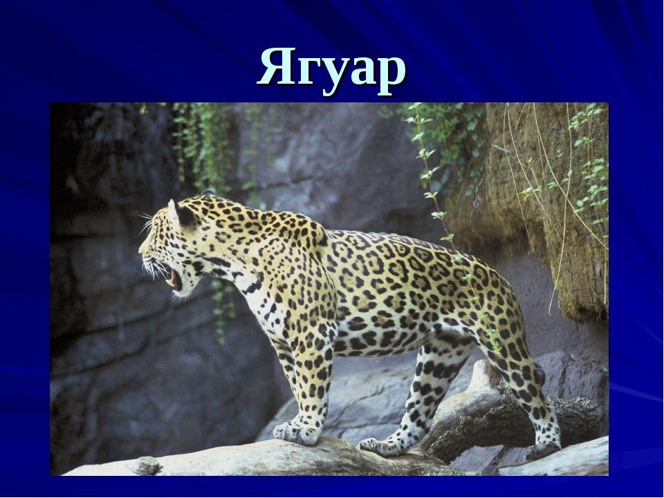 Ягуар